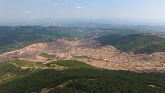 Haluk Levent'ten ağaç kesilmesine tepki: Milliyetçilik sadece bayrak profili ile olmuyor