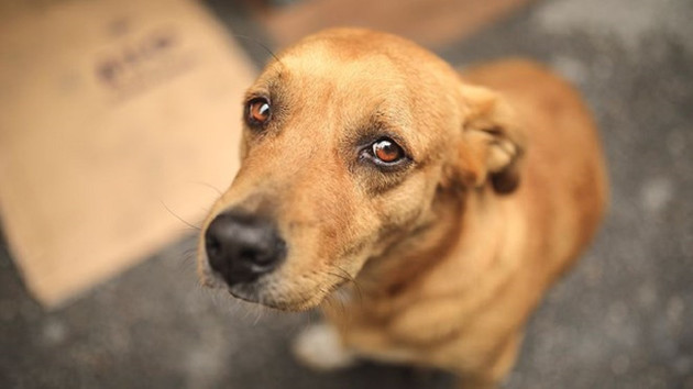Hayvan hakları yasasına geri sayım: Terk edene 10 bin TL ceza
