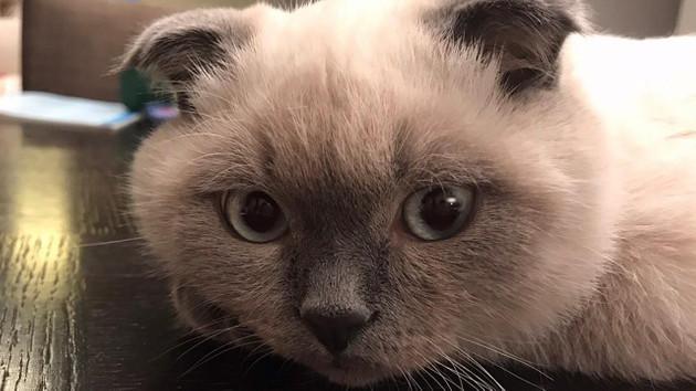 Kedi öpücüğü nedir? Kediler sizi gözleriyle öpüyor