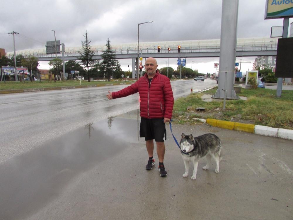 Köpeği ile birlikte günlerce otostop çekti