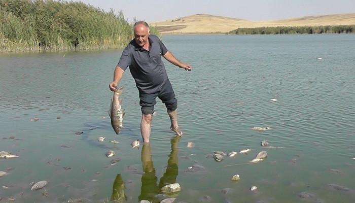 Konya'da korkutan balık ölümleri