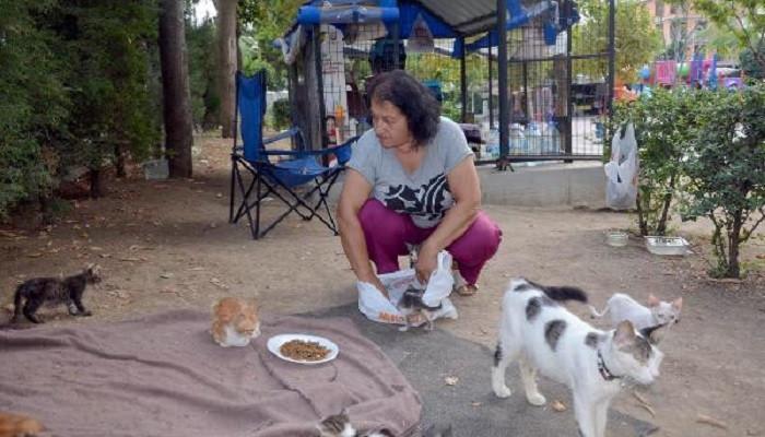 Kedi evinin gönüllü bakıcısı: Yıldız Urhan
